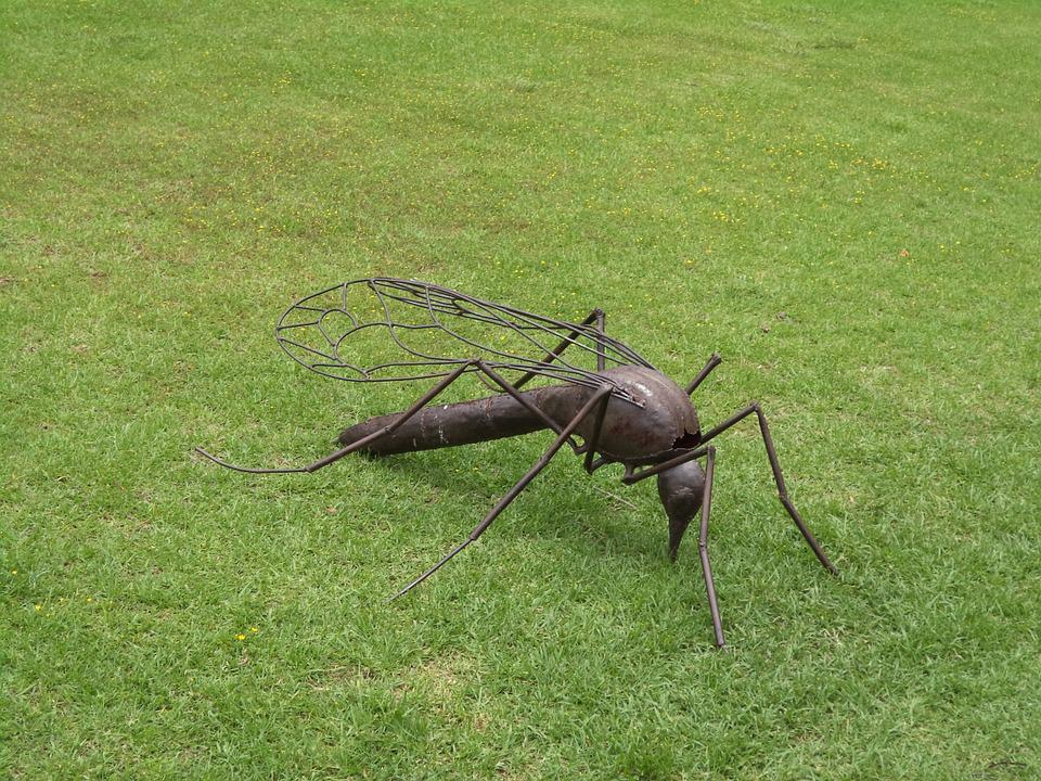 Mosquito, Insect, Bug