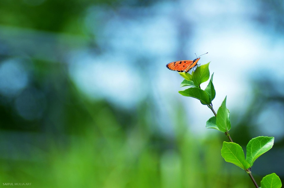 Flower, Butterfly, Insect, Wing, Wildlife, Bug, Bright