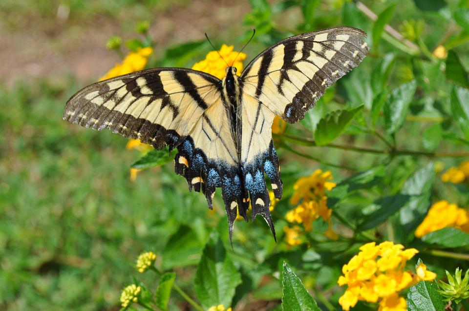 Floral, Butterfly, Flower, Nature, Garden, Insect