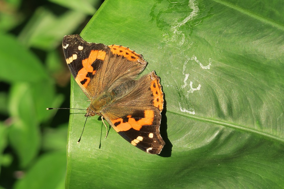 Nature, Insect, Butterfly