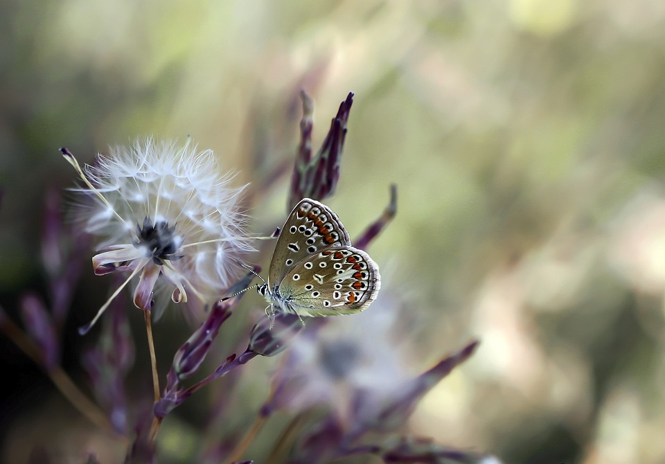 Butterfly, Insect, Wing, Nature, Animals, Beautiful
