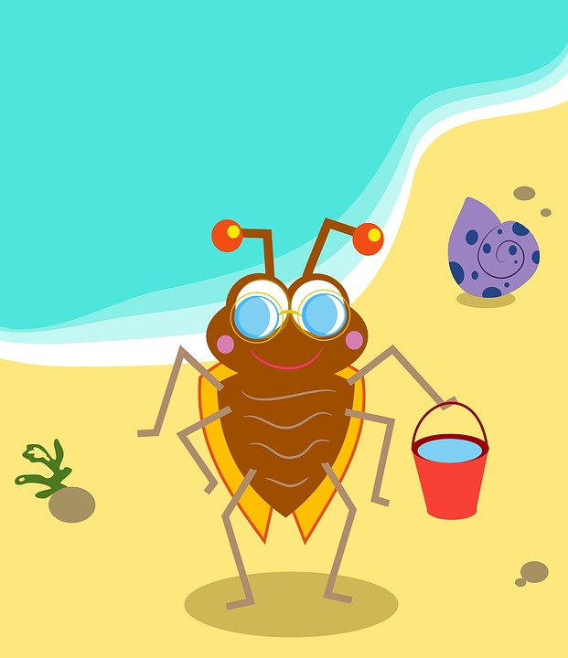 Animal, Nature, Cartoon, Bug, Insect, Beetle, Beach