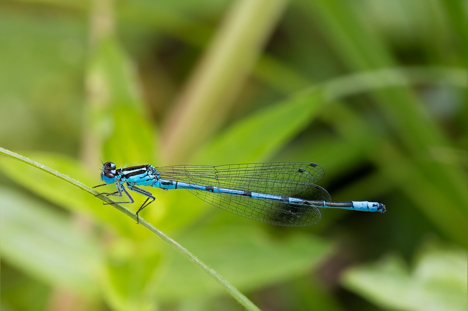 Dragonfly, Macro, Close, Insect, Animal, Blue Dragonfly
