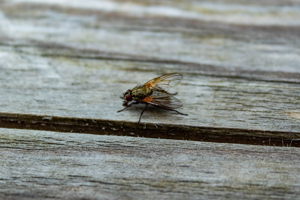 Fly, Insect, Board, Macro, Nature, Close Up