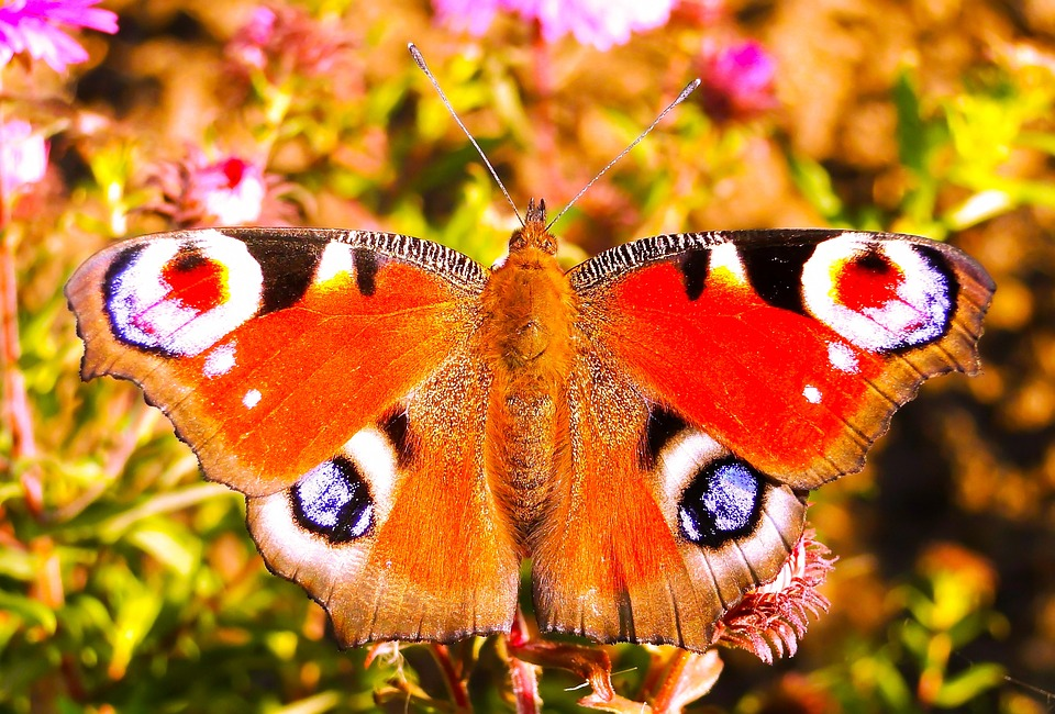 Butterfly Day, Animals, Insect, Nature, Color