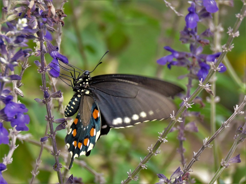 Insect, Butterfly, Colorful