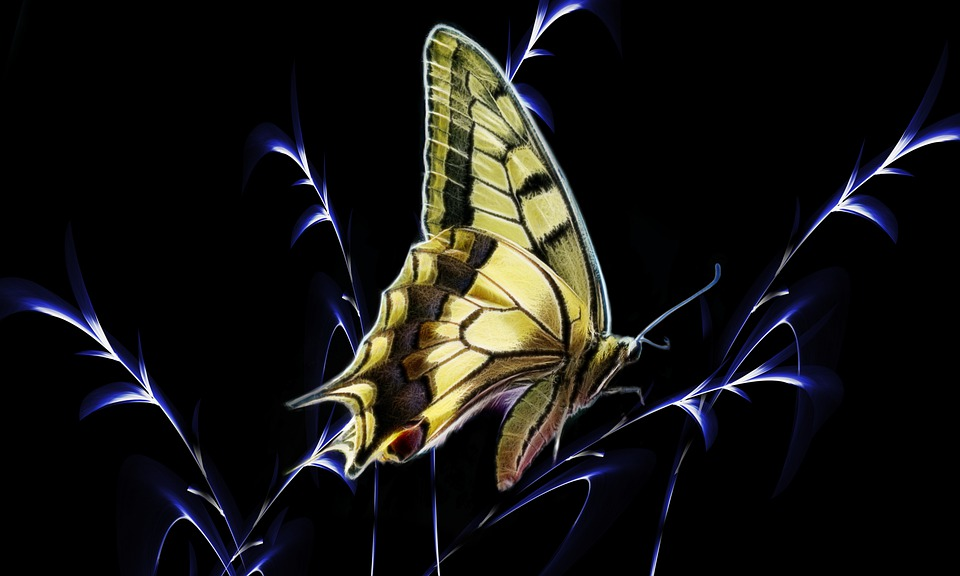 Butterfly, Dovetail, Fractalius, Nature, Insect