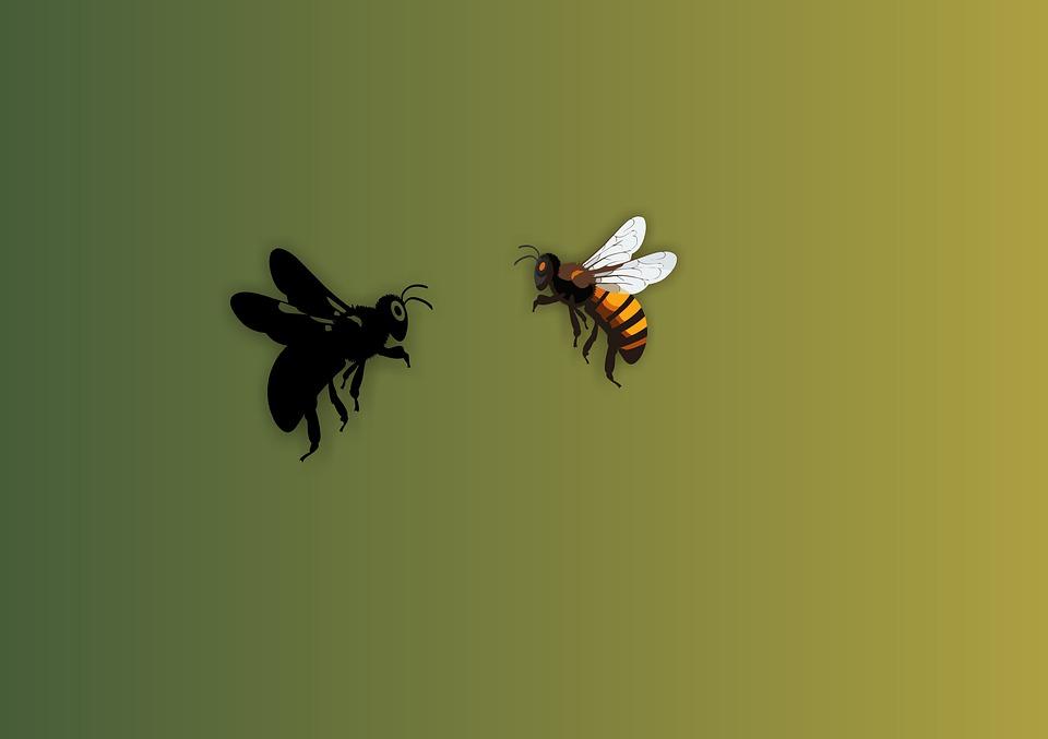 Bee, Honeybee, Insect, Honey, Bumblebee, Fly, Yellow