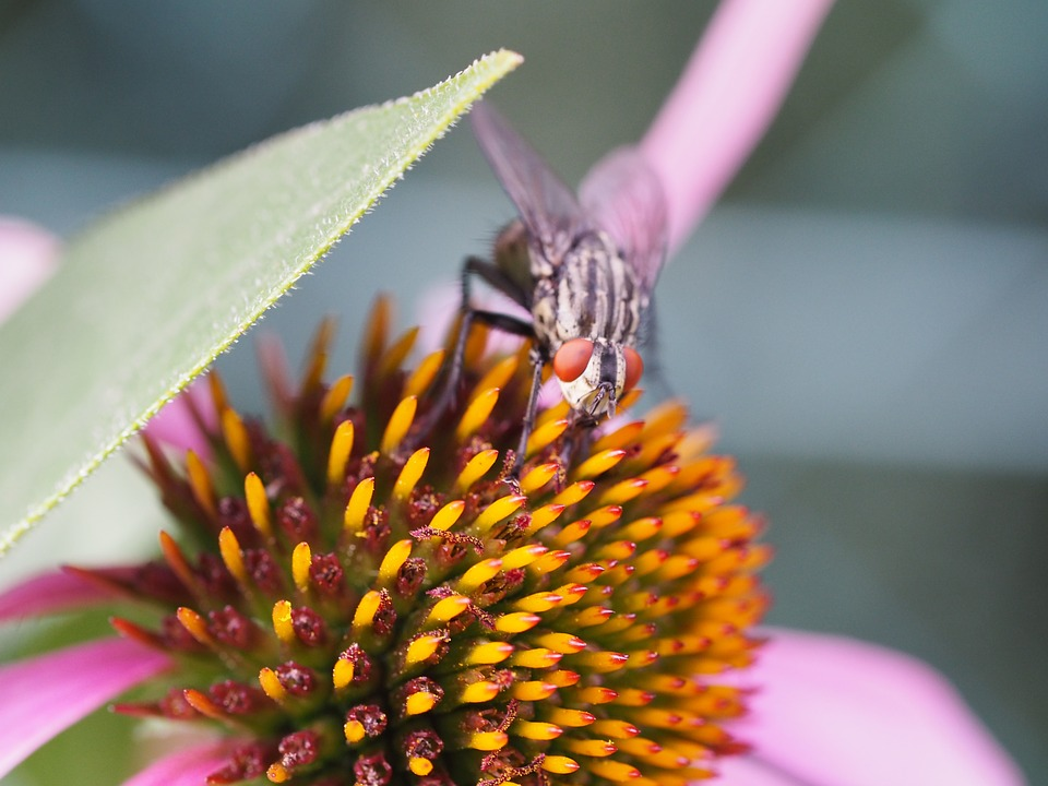 Fly, Insect, Macro, Nature, Animals, Flowers, Leaf