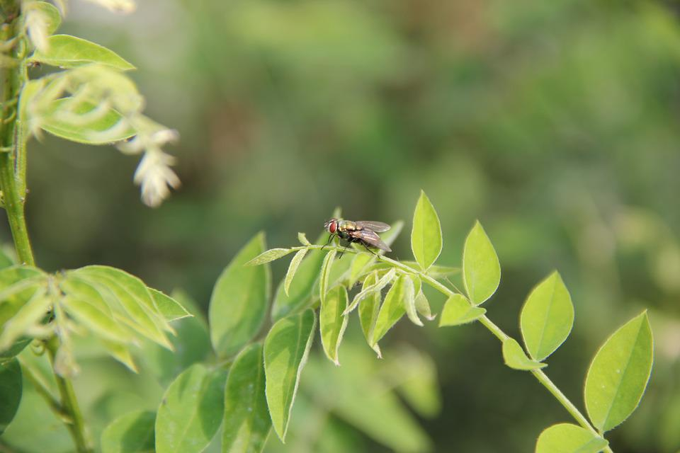 Insect, Material, Fly