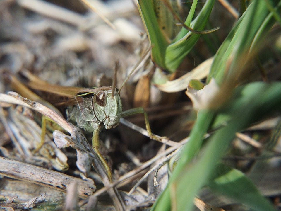 Bug, Grass Hopper, Insect, Hampshire, Uk Nature, Summer