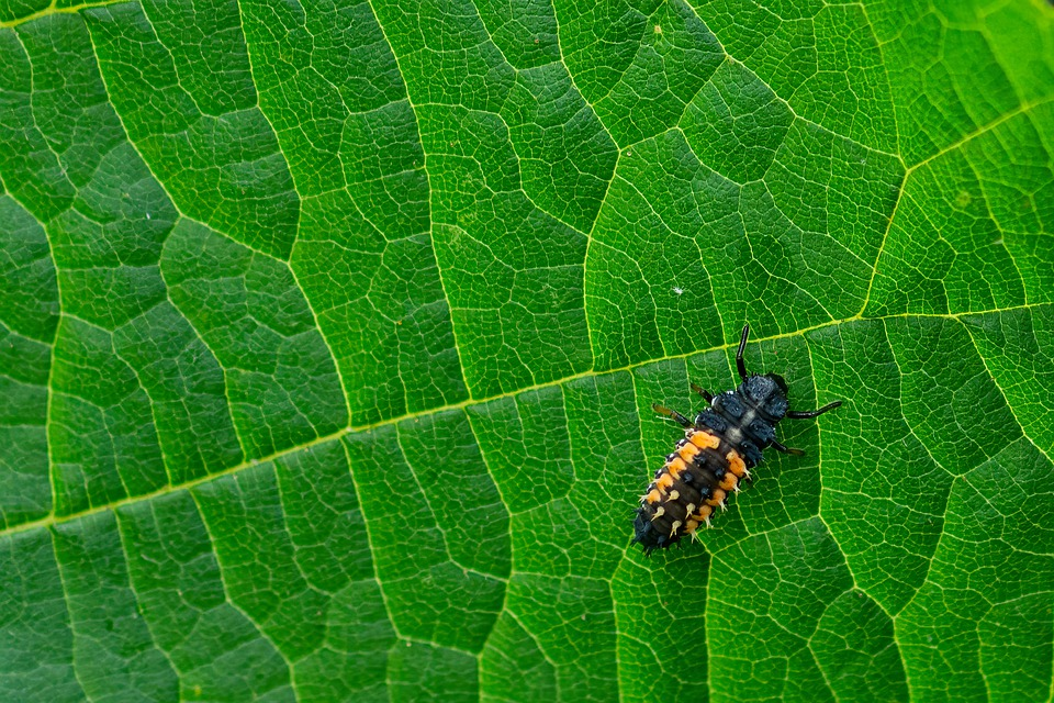 Insect, Bug, Leaf, Green