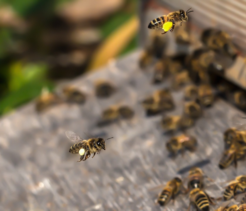 Bee, Beehive, Insect, Honey, Bees Stand, Honey Bee