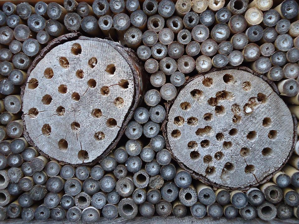 Background, Circles, Insect Hotel, Insects, Wood