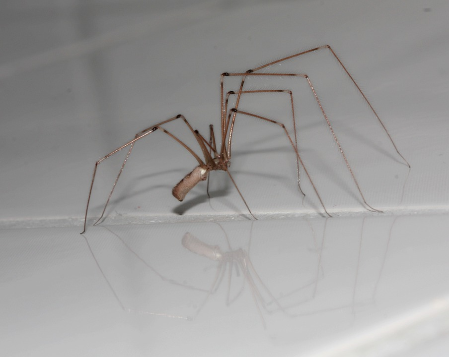 Spider, Arachnids, Legs, Insect, Arachne