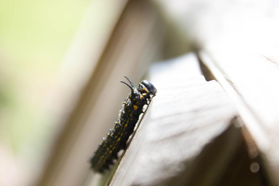 Nature, Scenery, Insect, Macro, Worm