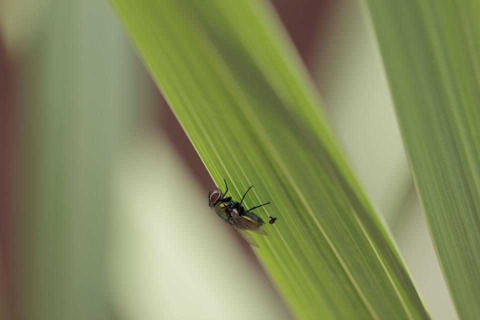 Macro, Fly, Grass, Outside, Green, Up Close, Insect
