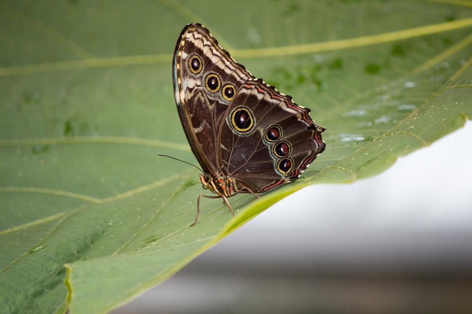 Butterfly, Butterflies, Nature, Brown, Wings, Insect
