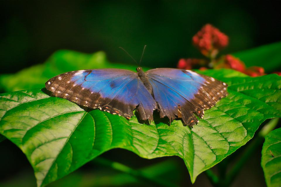 Butterfly, Insect, Wing, Animal, Nature, Close Up