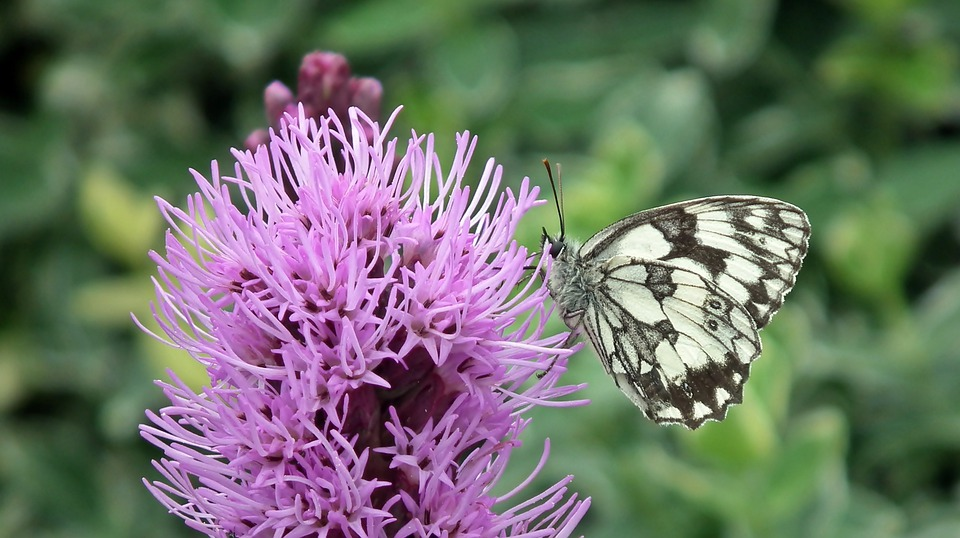 Butterfly, Flower, Insect, Macro, Nature, Wing, Summer