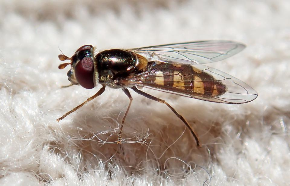 Hover Fly, Insect, Fabric, Knitting, Wildlife, Nature