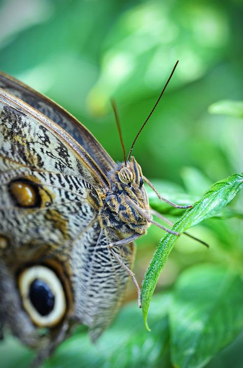 Nature, Butterfly, Leaf, Insect, Garden, Macro