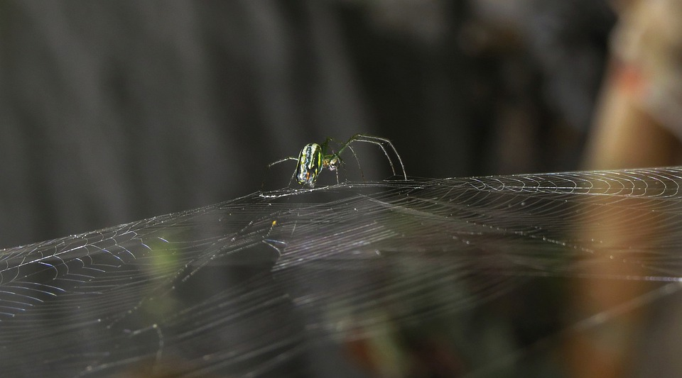 Insect, Nature, Invertebrate, Outdoors, Pearl, Colombia