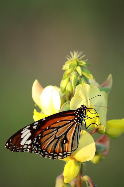 Butterfly, Nature, Insect, Flower, Outdoors, Summer