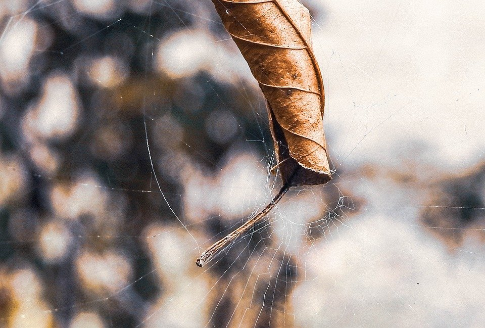 Nature, Outdoors, Dry, Insect, Close, Web
