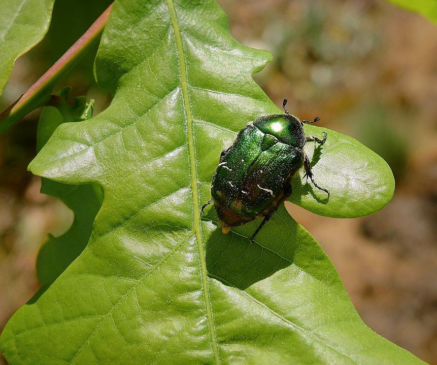 Insect, Green Beetle, Nature, Worm