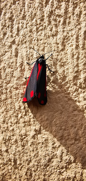 Insect, Insect On Wall, Color, Wall, Bugs, Alive
