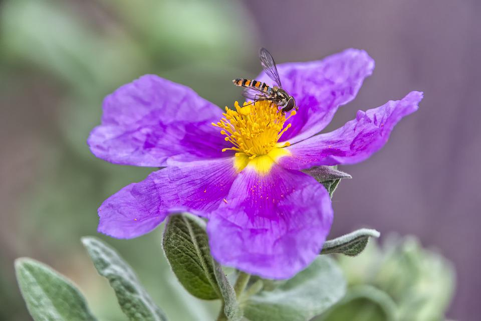 Flower, Insect, Pollen, Pollinate, Pollination