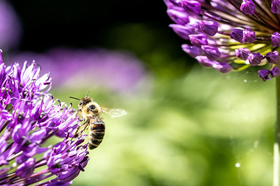 Flowers, Bee, Insect, Petals, Pollen, Pollination