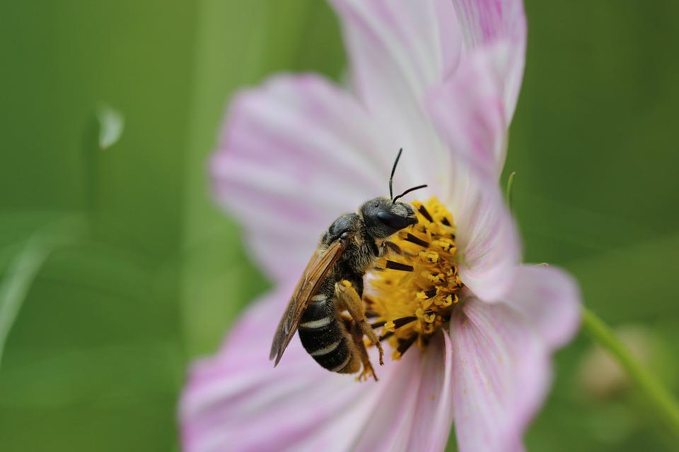 Bee, Hornet, Insect, Flower, Daisy, Postcard