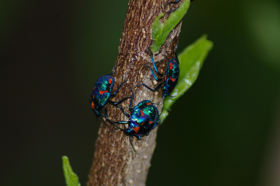 Bug, Insect, Blue, Red, Beetle, Bug Insect, Nature