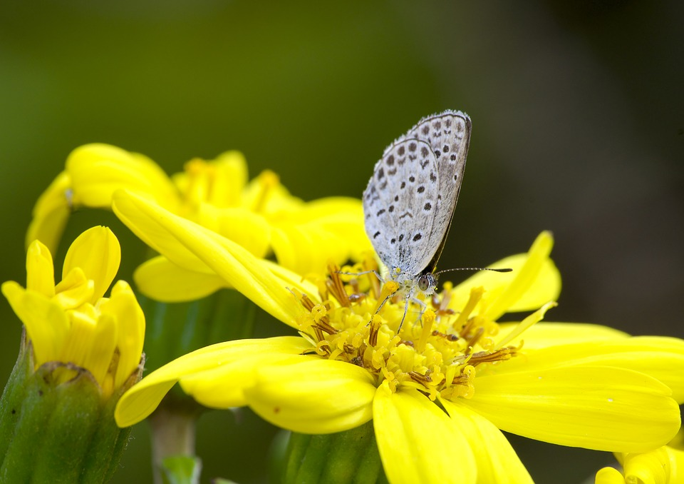 Japan, Saitama, Butterfly, Insect, Natural, Bug