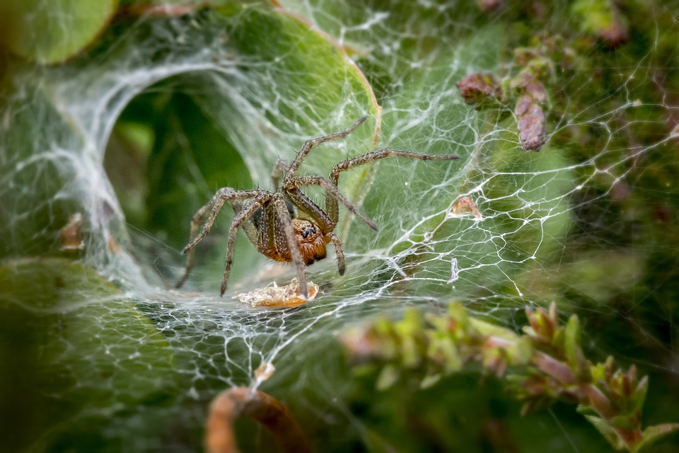 Funnel Web Spider, Insect, Scary, Bug, Fear, Arachnid
