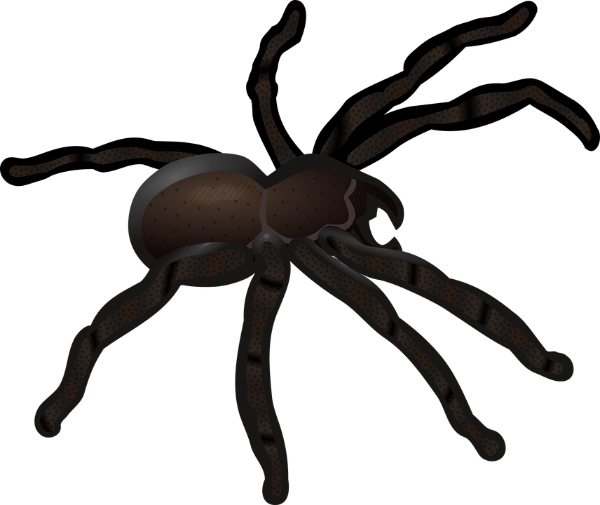 Animal, Insect, Short Abc Pictures, Spider