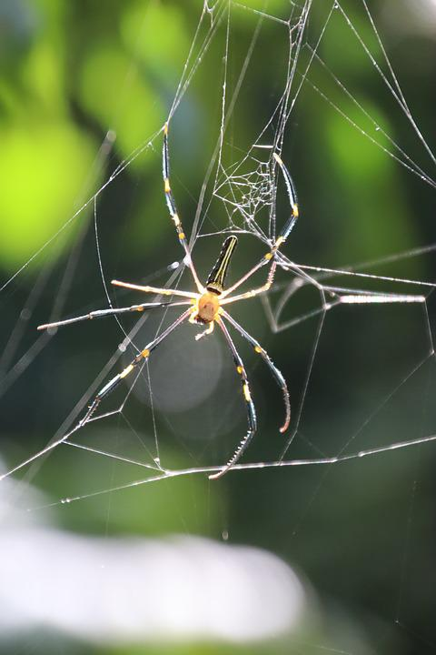 Spider, Cobweb, Exotic, Insect, Nature, Close Up