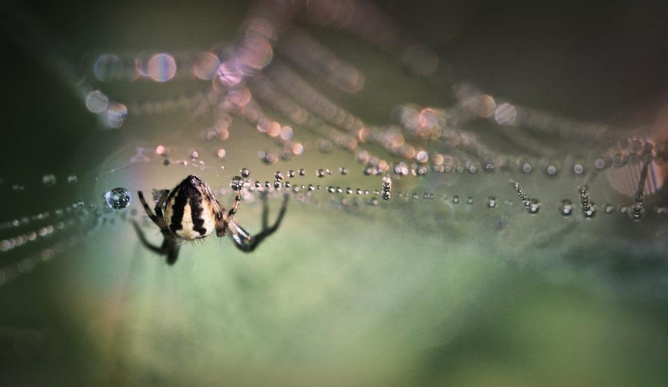 Spider, Insect, Close Up, Arachnid, Cobweb, Nature