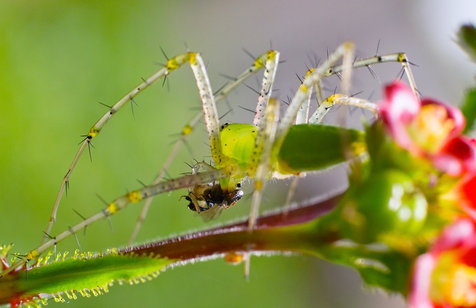 Spider, Insect, India