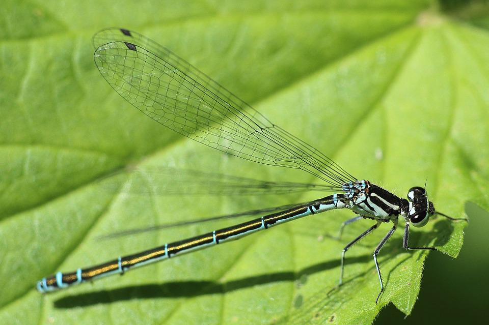 Dragonfly, Insect, Spring, Early Summer, Sun, Leaf