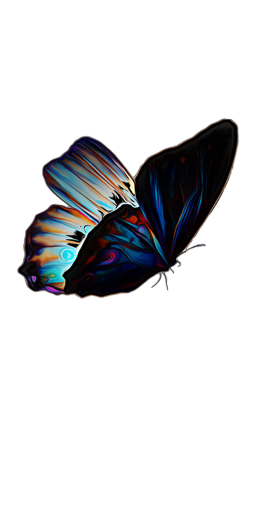Butterfly, Insect, Summer, Nature, Colorful, Design