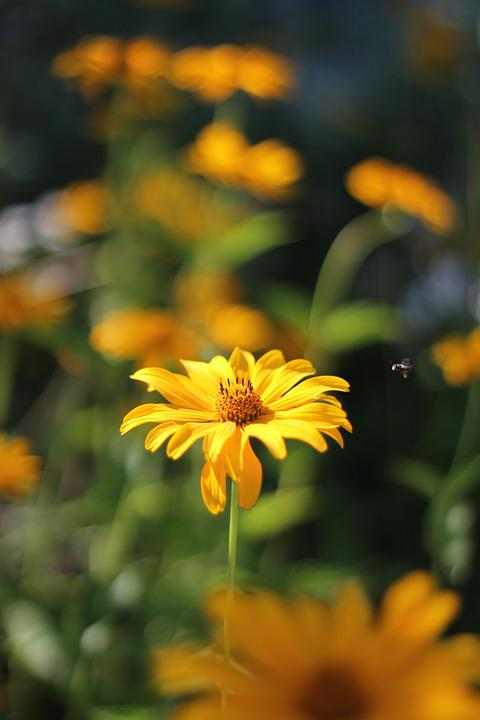 Flower, Yellow, Bee, Insect, A Yellow Flower, Summer
