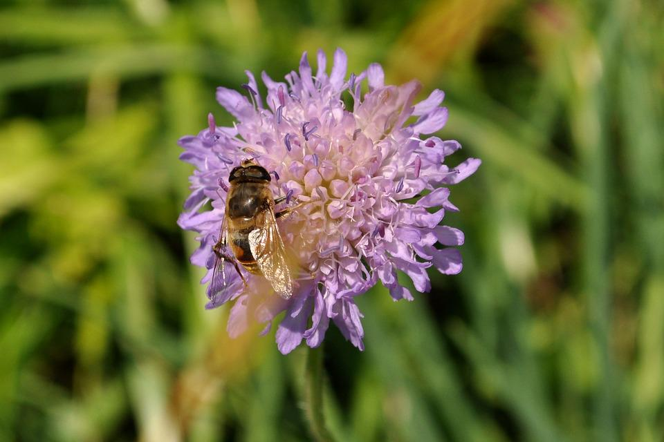 Nature, Flower, Plant, Summer, Close, Bee, Insect