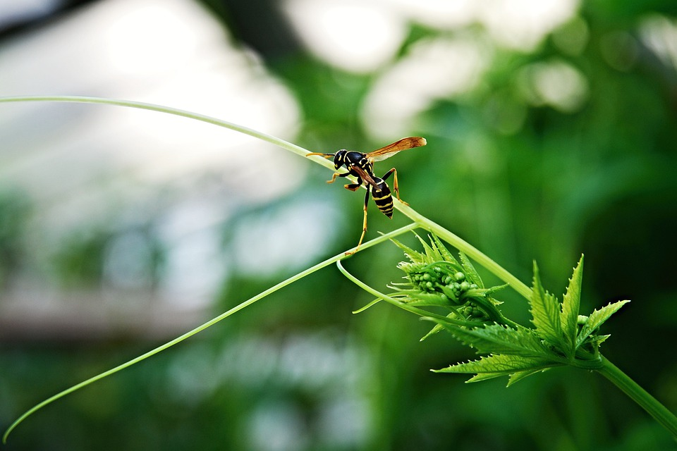 Wasp, Insect, Greenhouse, Tendril, Tendrils