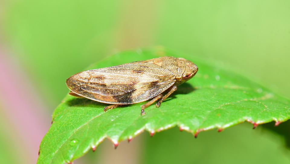 Insect, Strange Insect, Macro, Tiny, Nature, Diversity