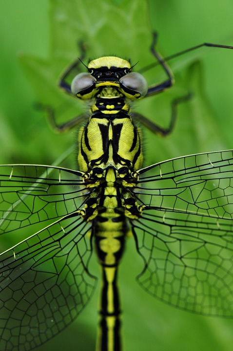 Dragonfly, Macro, Insect, Water, Predatory Insect