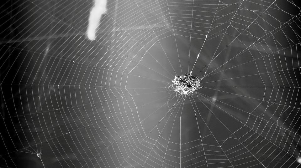 Black And White, Insect, Spider Weaver, Web