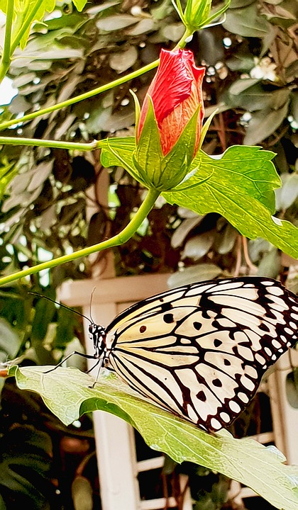 Butterfly, Insect, Nature, Animal, Wing, Animal World